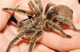 Hypnotherapy for Fear of Spiders